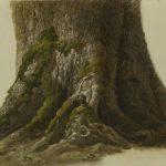 Frommel, Carl Ludwig ~ Wurzelfuß eines Feldahorns (Base of Common Maple)